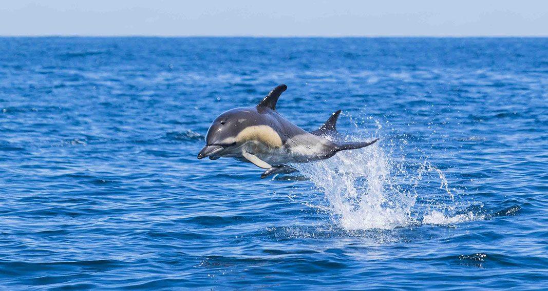 Avista cetáceos en su hábitat natural, en el País Vasco Francés
