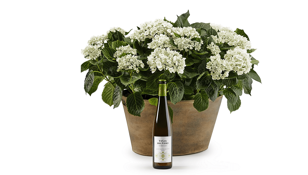 Viñas del Vero Gewürztraminer, hace especial la primavera
